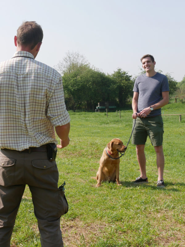 One-to-one dog training lessons